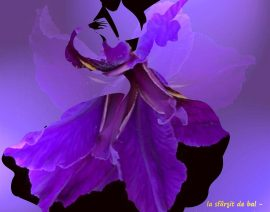 Cercasi ballerina Danze standard